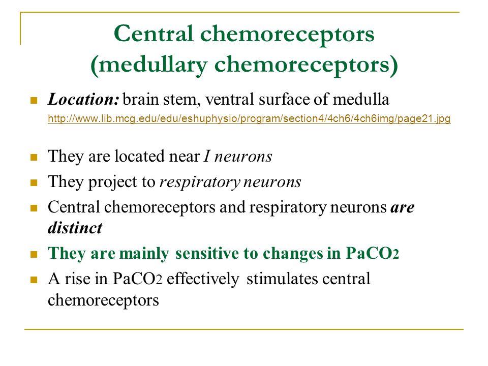 Central chemoreceptors (medullary chemoreceptors) Location: brain stem, ventral surface of medulla http://www.lib.mcg.edu/edu/eshuphysio/program/secti