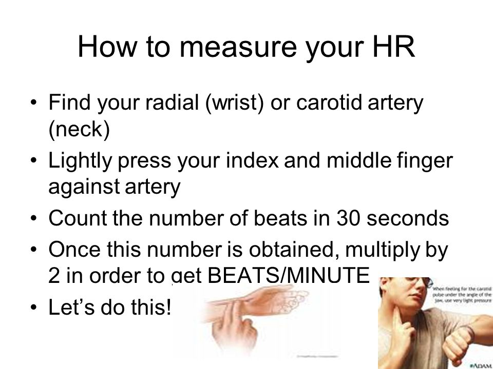 How to measure your HR Find your radial (wrist) or carotid artery (neck) Lightly press your index and middle finger against artery Count the number of