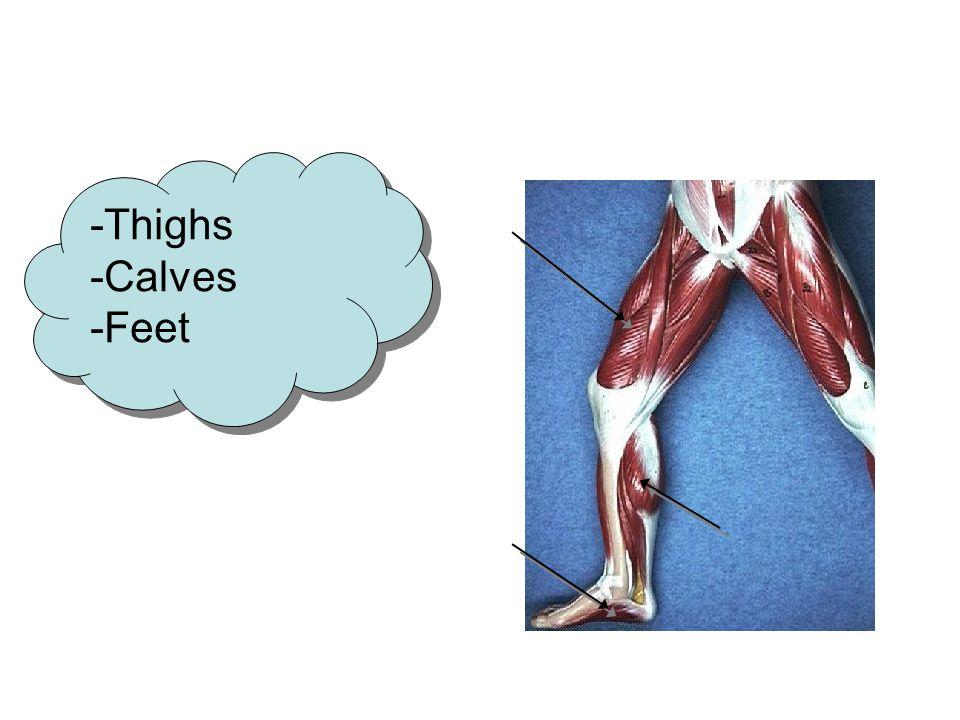 -Thighs -Calves -Feet -Thighs -Calves -Feet