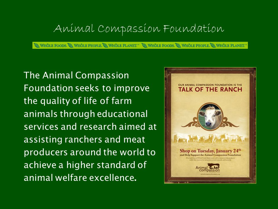 Animal Compassion Foundation The Animal Compassion Foundation seeks to improve the quality of life of farm animals through educational services and research aimed at assisting ranchers and meat producers around the world to achieve a higher standard of animal welfare excellence.