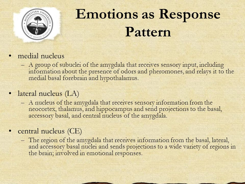 Emotions as Response Pattern medial nucleus –A group of subuclei of the amygdala that receives sensory input, including information about the presence of odors and pheromones, and relays it to the medial basal forebrain and hypothalamus.