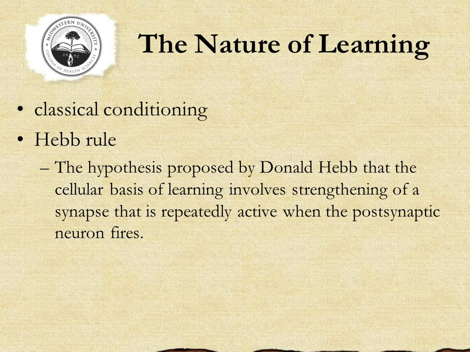 The Nature of Learning classical conditioning Hebb rule –The hypothesis proposed by Donald Hebb that the cellular basis of learning involves strengthening of a synapse that is repeatedly active when the postsynaptic neuron fires.