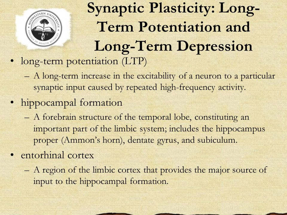 Synaptic Plasticity: Long- Term Potentiation and Long-Term Depression long-term potentiation (LTP) –A long-term increase in the excitability of a neuron to a particular synaptic input caused by repeated high-frequency activity.
