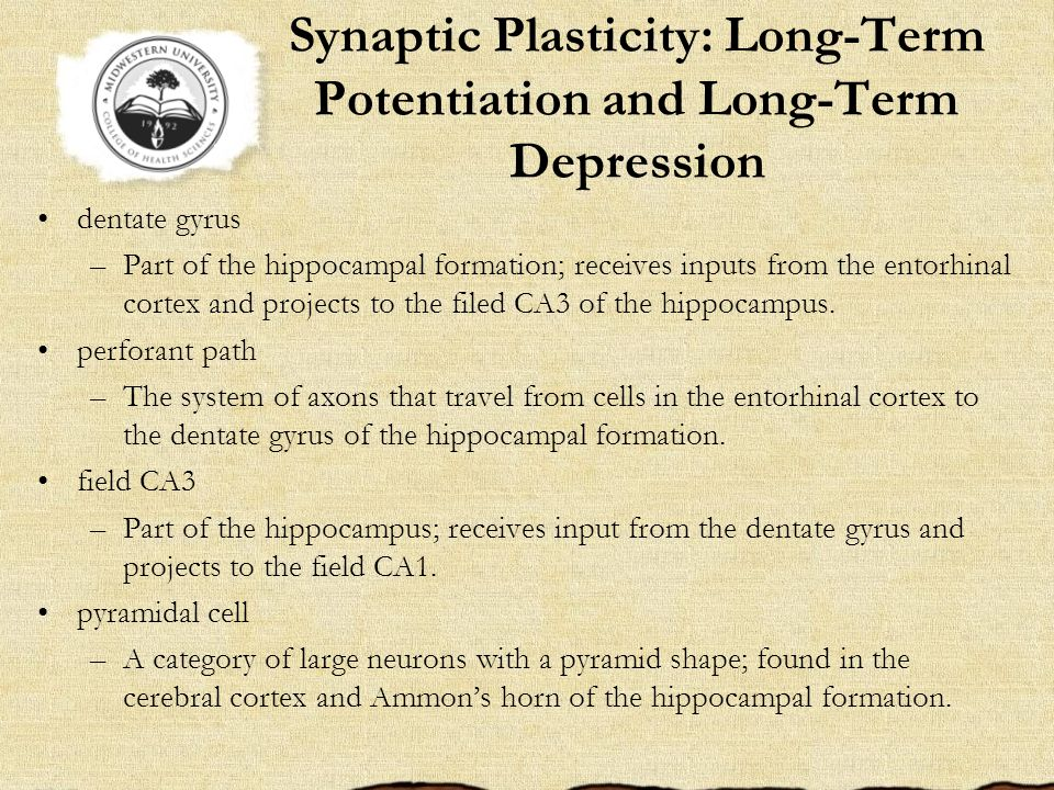 Synaptic Plasticity: Long-Term Potentiation and Long-Term Depression dentate gyrus –Part of the hippocampal formation; receives inputs from the entorhinal cortex and projects to the filed CA3 of the hippocampus.