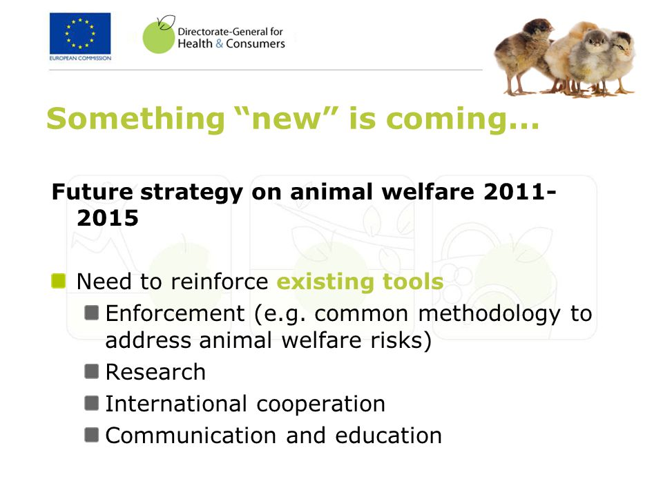 Future strategy on animal welfare 2011- 2015 Need to reinforce existing tools Enforcement (e.g. common methodology to address animal welfare risks) Re