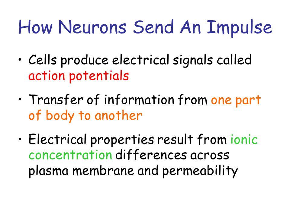 Nerve Impulses – Making the Electricity Resting Vs.