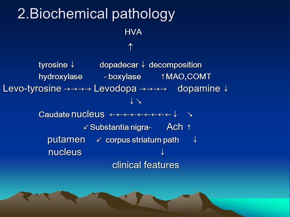 2.Biochemical pathology HVA HVA  tyrosine ↓ dopadecar ↓ decomposition tyrosine ↓ dopadecar ↓ decomposition hydroxylase - boxylase ↑MAO,COMT hydroxylase - boxylase ↑MAO,COMT Levo-tyrosine →→→→ Levodopa →→→→ dopamine ↓ ↓ ↘ ↓ ↘ Caudate nucleus ←←←←←←←←←↓ ↘ Caudate nucleus ←←←←←←←←←↓ ↘ ↙ Substantia nigra- Ach ↑ ↙ Substantia nigra- Ach ↑ putamen ↙ corpus striatum path ↓ putamen ↙ corpus striatum path ↓ nucleus ↓ nucleus ↓ clinical features clinical features