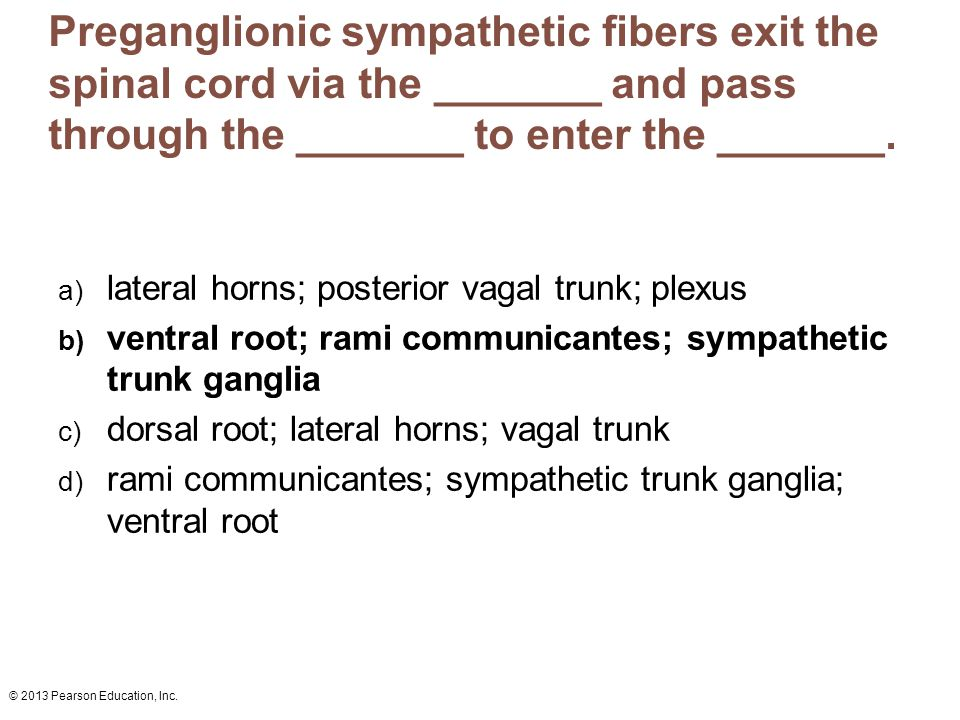 © 2013 Pearson Education, Inc. Preganglionic sympathetic fibers exit the spinal cord via the _______ and pass through the _______ to enter the _______
