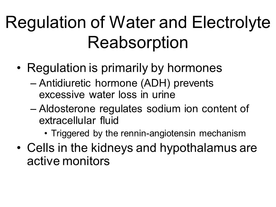 Regulation of Water and Electrolyte Reabsorption Regulation is primarily by hormones –Antidiuretic hormone (ADH) prevents excessive water loss in urin
