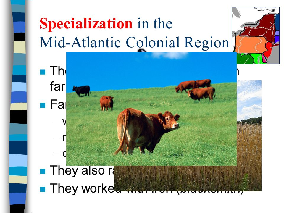 Specialization in the Mid-Atlantic Colonial Region n The Mid-Atlantic colonies had rich farmland. n Farmers produced large harvests of: –wheat –rye –c