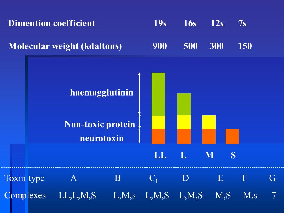 LL L M S Dimention coefficient 19s 16s 12s 7s Molecular weight (kdaltons) 900 500 300 150 haemagglutinin Non-toxic protein neurotoxin Toxin type A B C
