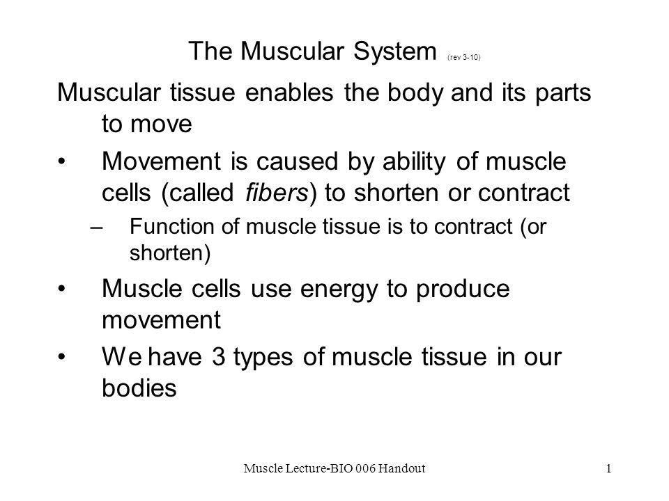 Muscle Lecture-BIO 006 Handout1 The Muscular System (rev 3-10) Muscular tissue enables the body and its parts to move Movement is caused by ability of muscle cells (called fibers) to shorten or contract –Function of muscle tissue is to contract (or shorten) Muscle cells use energy to produce movement We have 3 types of muscle tissue in our bodies