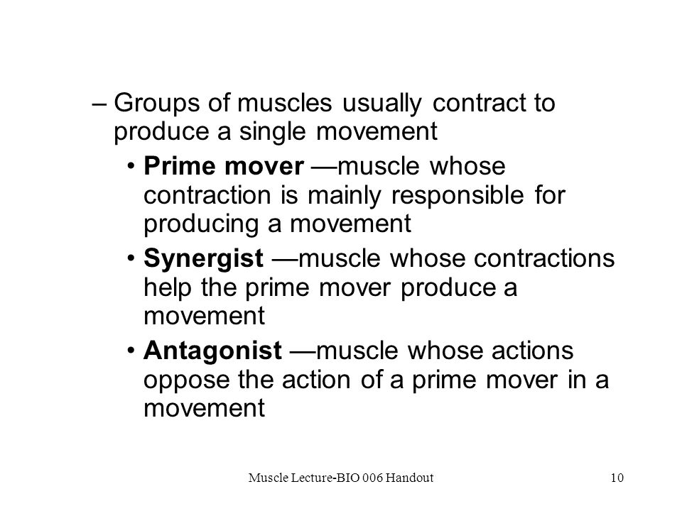 Muscle Lecture-BIO 006 Handout10 –Groups of muscles usually contract to produce a single movement Prime mover —muscle whose contraction is mainly responsible for producing a movement Synergist —muscle whose contractions help the prime mover produce a movement Antagonist —muscle whose actions oppose the action of a prime mover in a movement