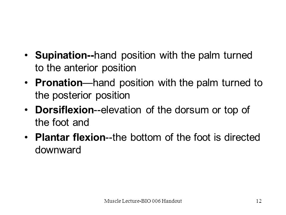 Muscle Lecture-BIO 006 Handout12 Supination--hand position with the palm turned to the anterior position Pronation—hand position with the palm turned to the posterior position Dorsiflexion--elevation of the dorsum or top of the foot and Plantar flexion--the bottom of the foot is directed downward
