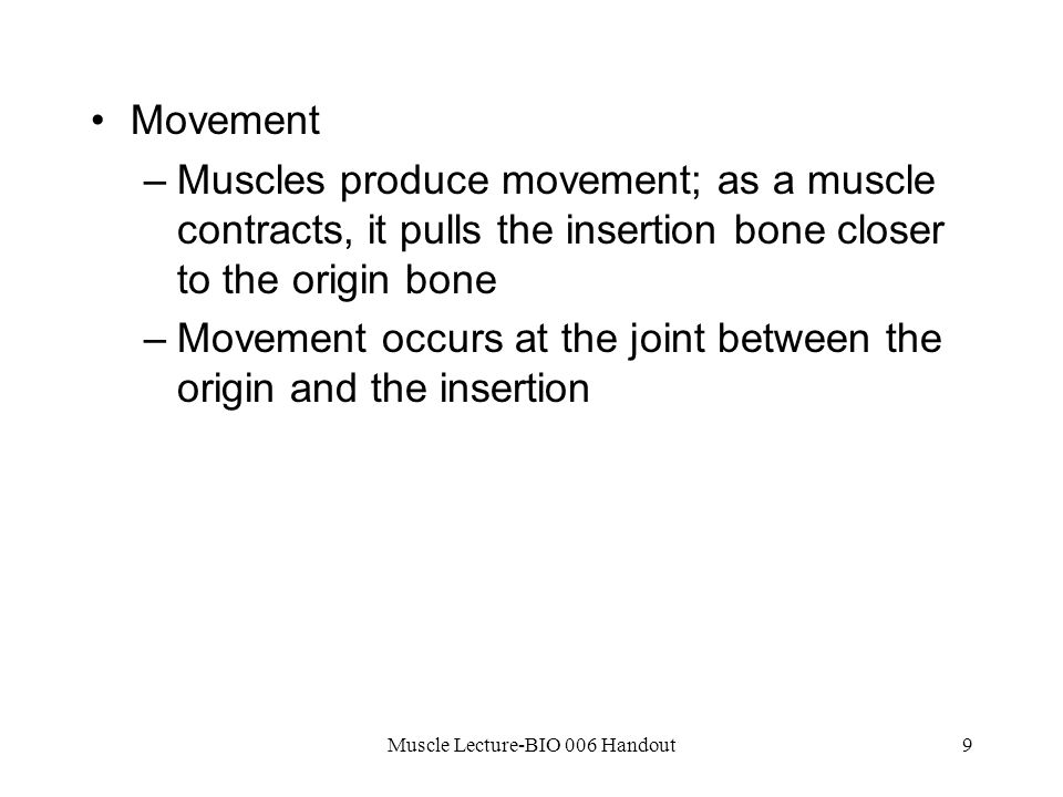 Muscle Lecture-BIO 006 Handout9 Movement –Muscles produce movement; as a muscle contracts, it pulls the insertion bone closer to the origin bone –Movement occurs at the joint between the origin and the insertion