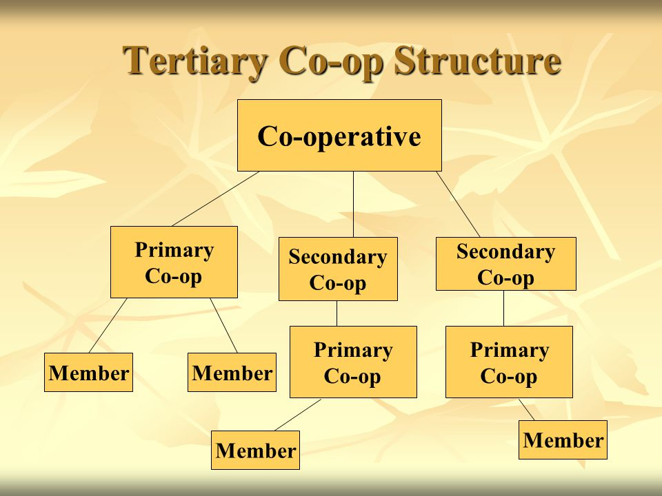 Tertiary Co-op Structure Tertiary Co-op Structure Co-operative Member Primary Co-op Secondary Co-op Secondary Co-op Primary Co-op Primary Co-op Member