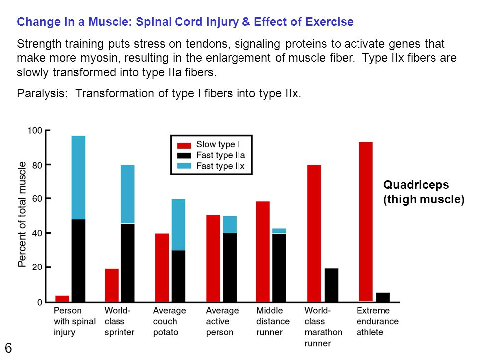 6 Change in a Muscle: Spinal Cord Injury & Effect of Exercise Strength training puts stress on tendons, signaling proteins to activate genes that make more myosin, resulting in the enlargement of muscle fiber.