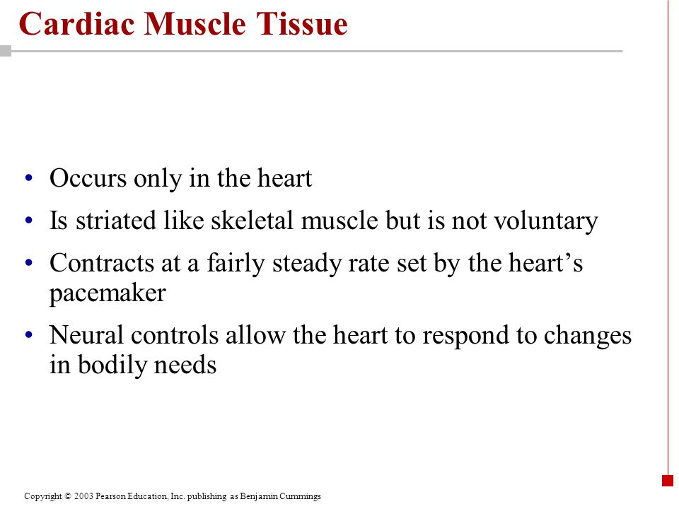 Copyright © 2003 Pearson Education, Inc. publishing as Benjamin Cummings Cardiac Muscle Tissue Occurs only in the heart Is striated like skeletal musc