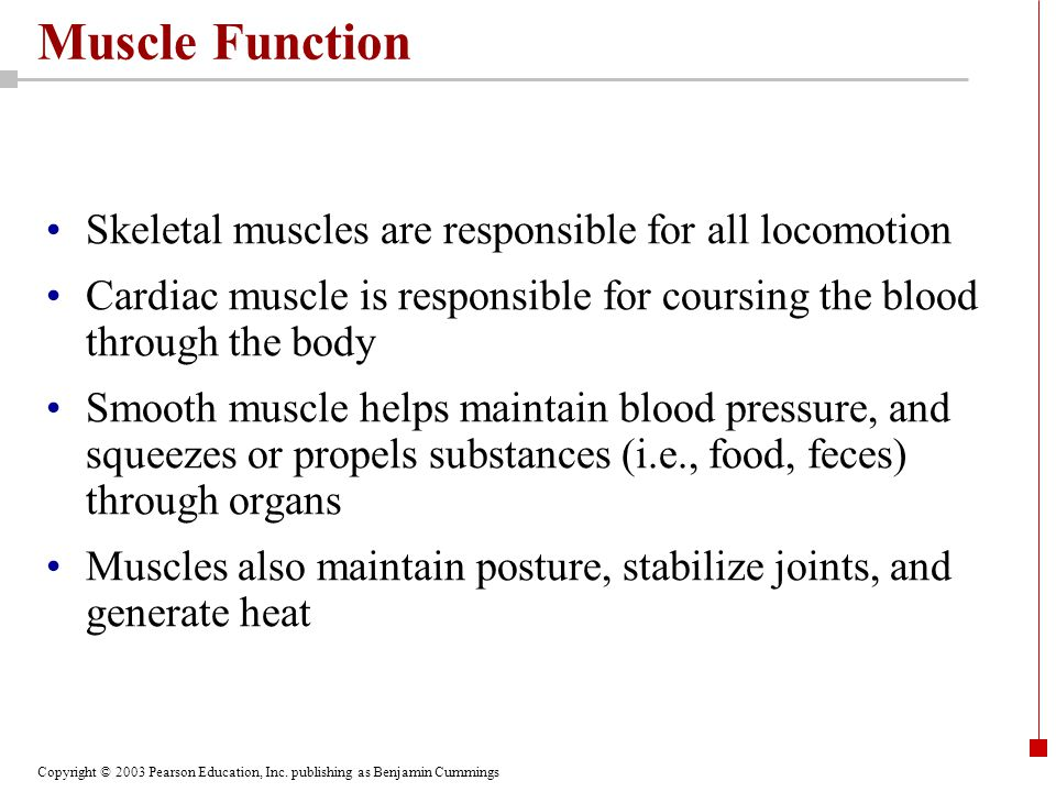Copyright © 2003 Pearson Education, Inc. publishing as Benjamin Cummings Muscle Function Skeletal muscles are responsible for all locomotion Cardiac m