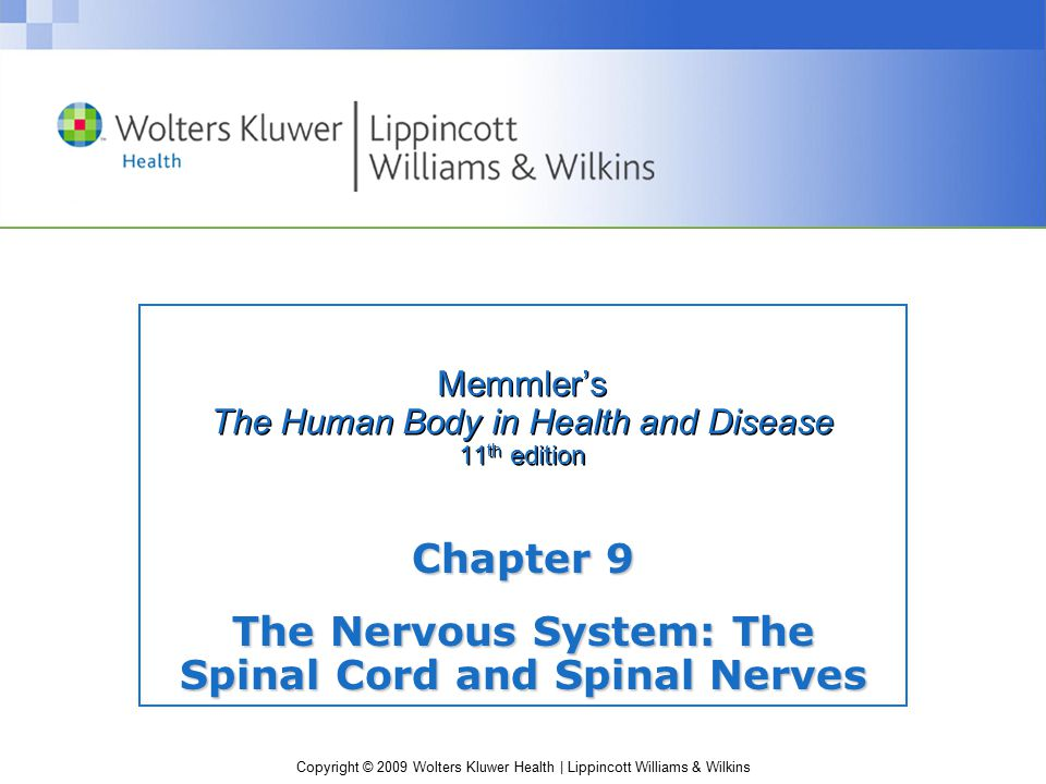 Copyright © 2009 Wolters Kluwer Health | Lippincott Williams & Wilkins Memmler's The Human Body in Health and Disease 11 th edition Chapter 9 The Nervous System: The Spinal Cord and Spinal Nerves