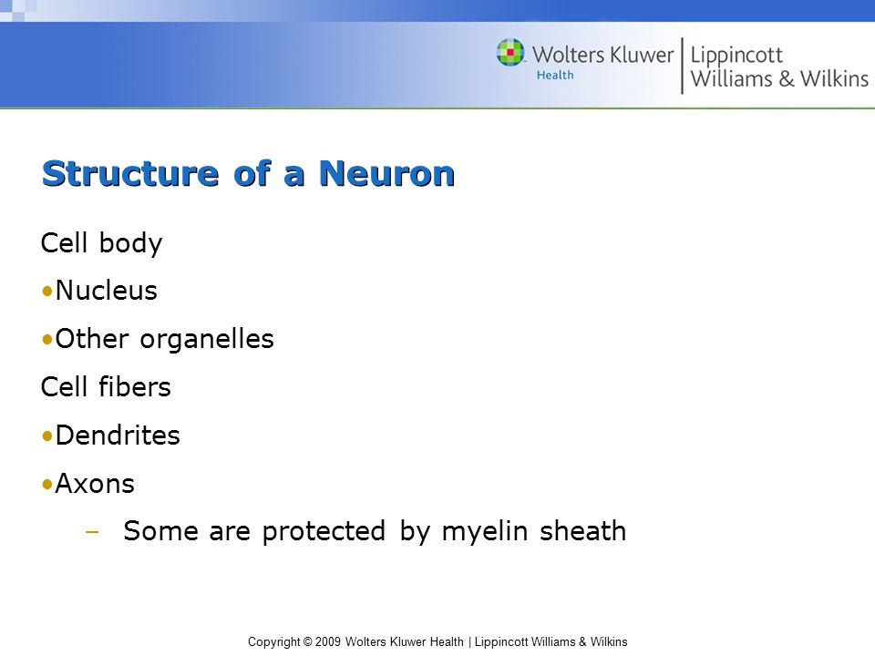 Copyright © 2009 Wolters Kluwer Health | Lippincott Williams & Wilkins Structure of a Neuron Cell body Nucleus Other organelles Cell fibers Dendrites Axons –Some are protected by myelin sheath