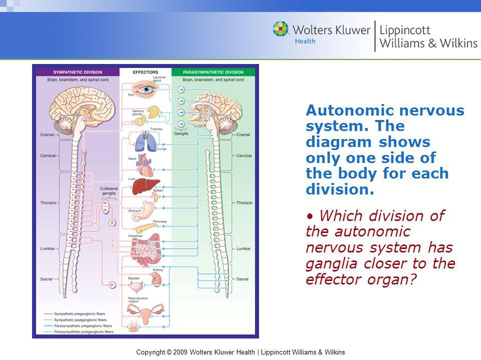 Copyright © 2009 Wolters Kluwer Health | Lippincott Williams & Wilkins Autonomic nervous system.