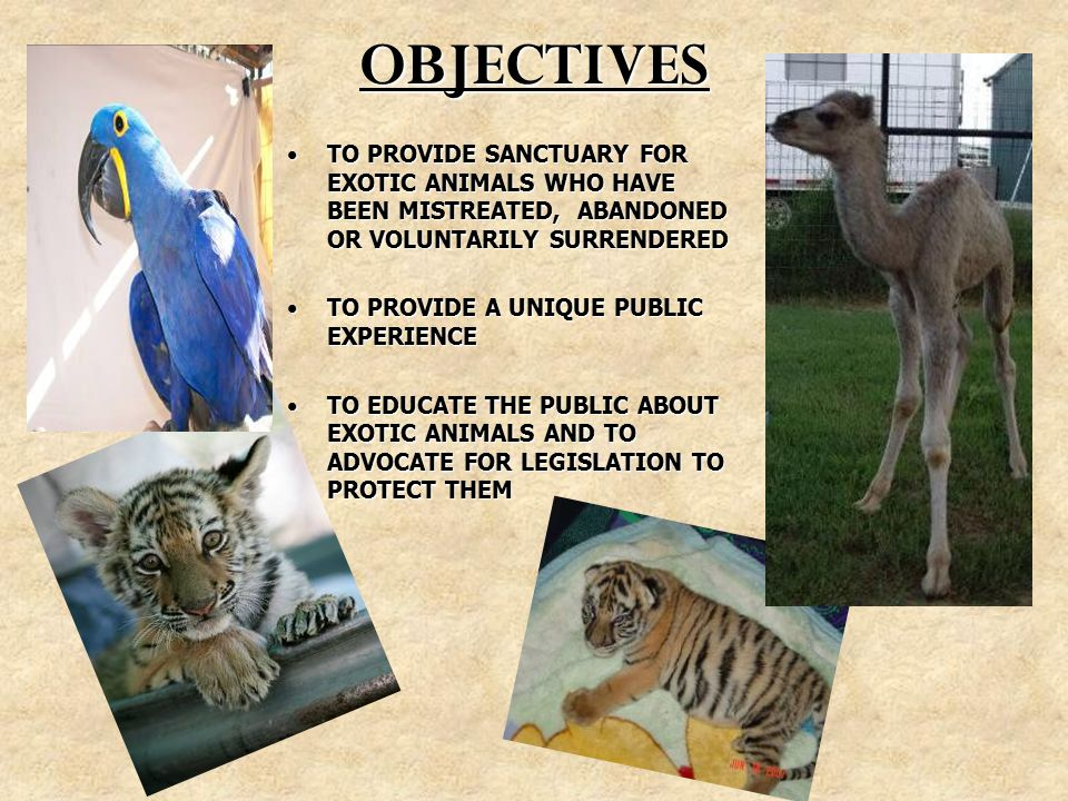 OBJECTIVES TO PROVIDE SANCTUARY FOR EXOTIC ANIMALS WHO HAVE BEEN MISTREATED, ABANDONED OR VOLUNTARILY SURRENDEREDTO PROVIDE SANCTUARY FOR EXOTIC ANIMALS WHO HAVE BEEN MISTREATED, ABANDONED OR VOLUNTARILY SURRENDERED TO PROVIDE A UNIQUE PUBLIC EXPERIENCETO PROVIDE A UNIQUE PUBLIC EXPERIENCE TO EDUCATE THE PUBLIC ABOUT EXOTIC ANIMALS AND TO ADVOCATE FOR LEGISLATION TO PROTECT THEMTO EDUCATE THE PUBLIC ABOUT EXOTIC ANIMALS AND TO ADVOCATE FOR LEGISLATION TO PROTECT THEM