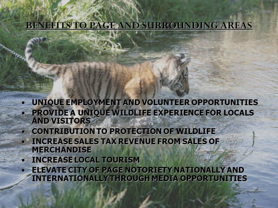 BENEFITS TO PAGE AND SURROUNDING AREAS UNIQUE EMPLOYMENT AND VOLUNTEER OPPORTUNITIESUNIQUE EMPLOYMENT AND VOLUNTEER OPPORTUNITIES PROVIDE A UNIQUE WILDLIFE EXPERIENCE FOR LOCALS AND VISITORSPROVIDE A UNIQUE WILDLIFE EXPERIENCE FOR LOCALS AND VISITORS CONTRIBUTION TO PROTECTION OF WILDLIFECONTRIBUTION TO PROTECTION OF WILDLIFE INCREASE SALES TAX REVENUE FROM SALES OF MERCHANDISEINCREASE SALES TAX REVENUE FROM SALES OF MERCHANDISE INCREASE LOCAL TOURISMINCREASE LOCAL TOURISM ELEVATE CITY OF PAGE NOTORIETY NATIONALLY AND INTERNATIONALLY THROUGH MEDIA OPPORTUNITIESELEVATE CITY OF PAGE NOTORIETY NATIONALLY AND INTERNATIONALLY THROUGH MEDIA OPPORTUNITIES