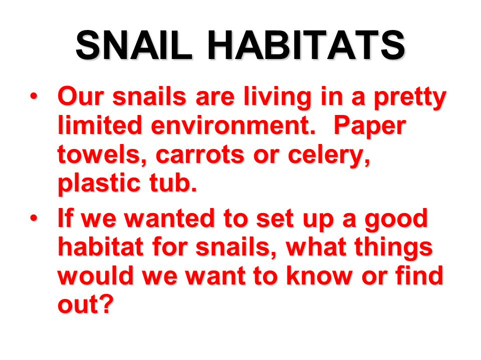 SNAIL HABITATS Our snails are living in a pretty limited environment. Paper towels, carrots or celery, plastic tub.Our snails are living in a pretty l