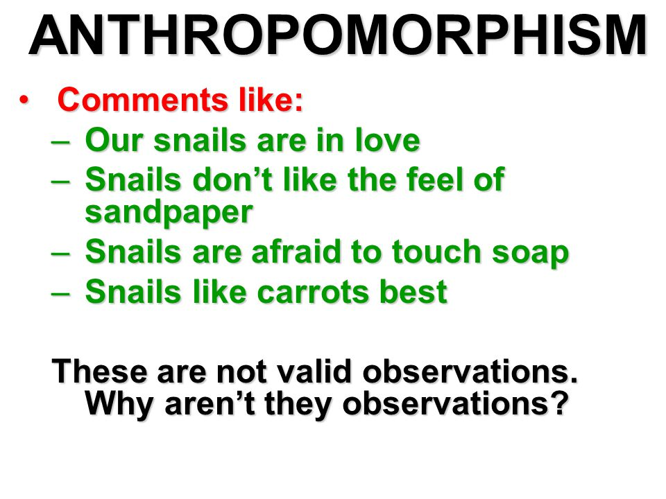 ANTHROPOMORPHISM Comments like:Comments like: –Our snails are in love –Snails don't like the feel of sandpaper –Snails are afraid to touch soap –Snails like carrots best These are not valid observations.