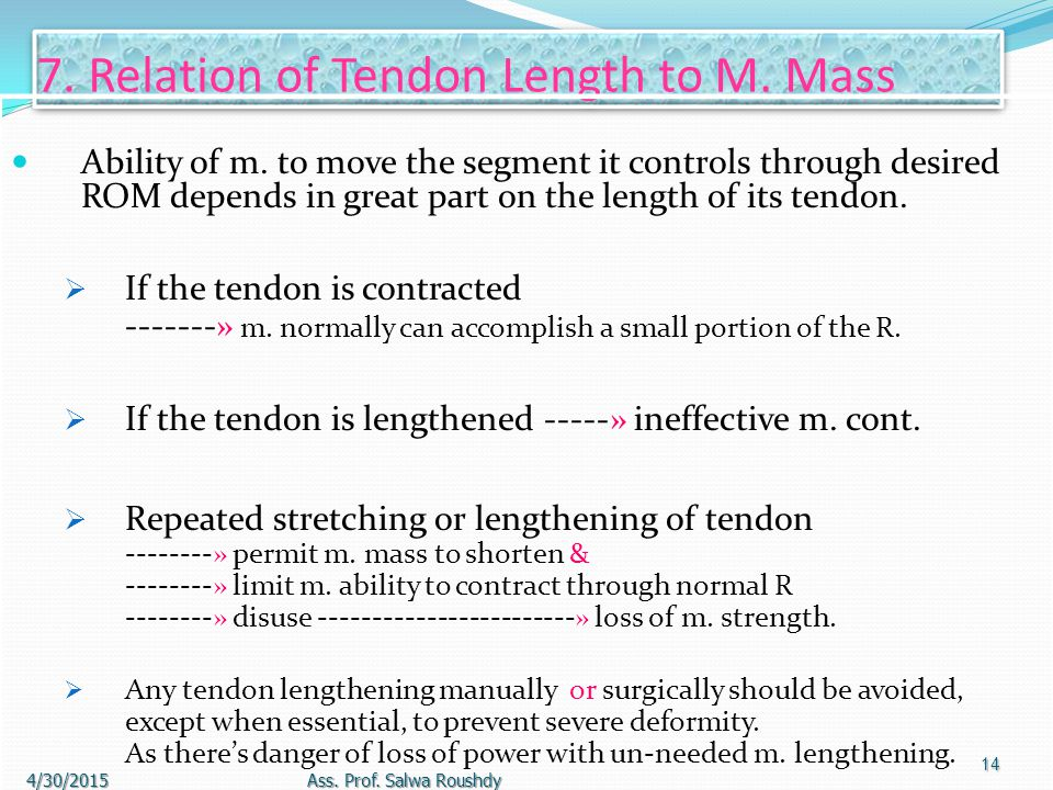 6. Muscle-Tendon Integrity & Mobility M. must be: 1. Intact throughout its length. 2. Stable at its origin & insertion before adequate response can be