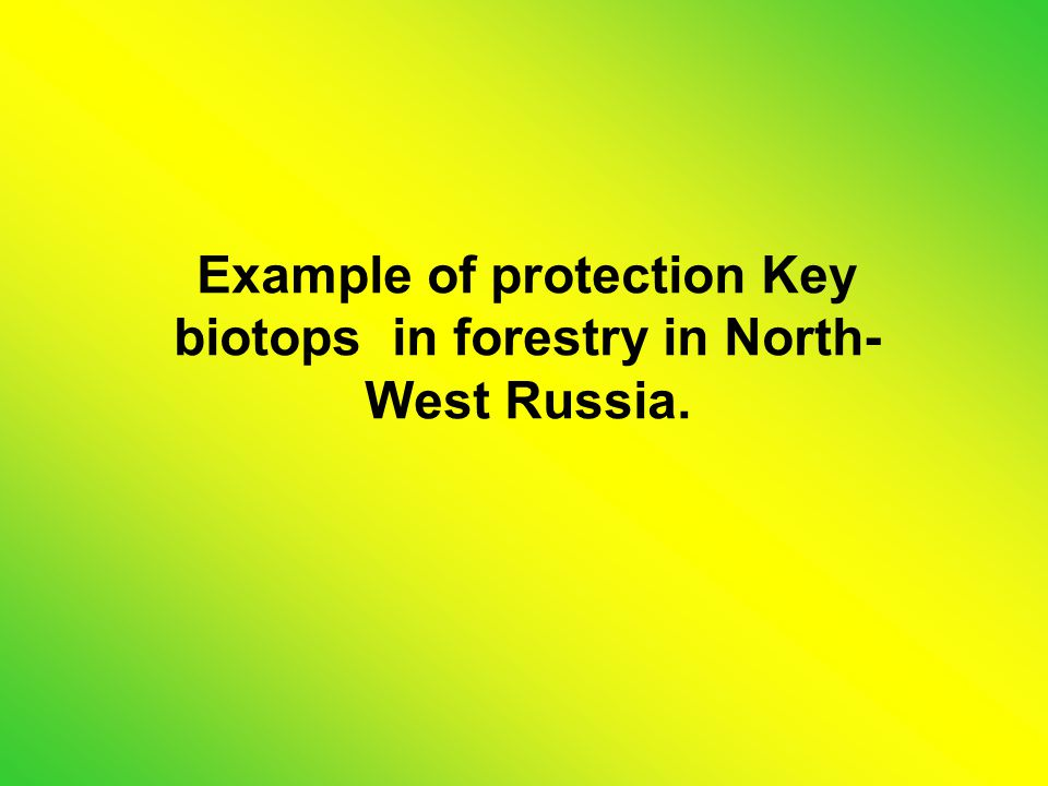 Example of protection Key biotops in forestry in North- West Russia.