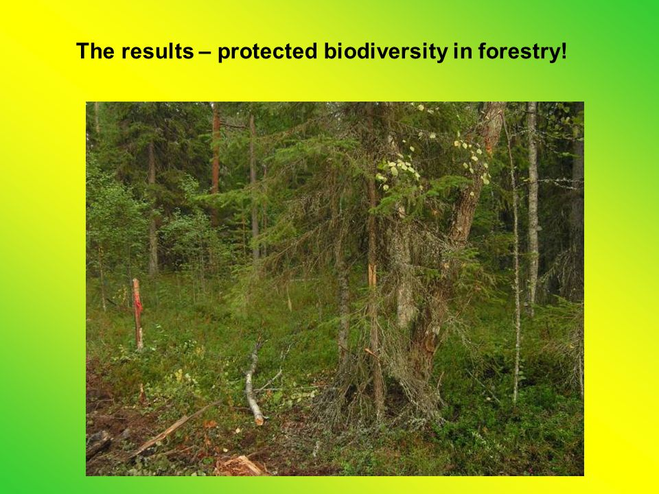 The results – protected biodiversity in forestry!