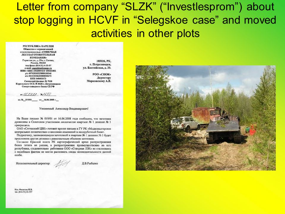 Letter from company SLZK ( Investlesprom ) about stop logging in HCVF in Selegskoe case and moved activities in other plots
