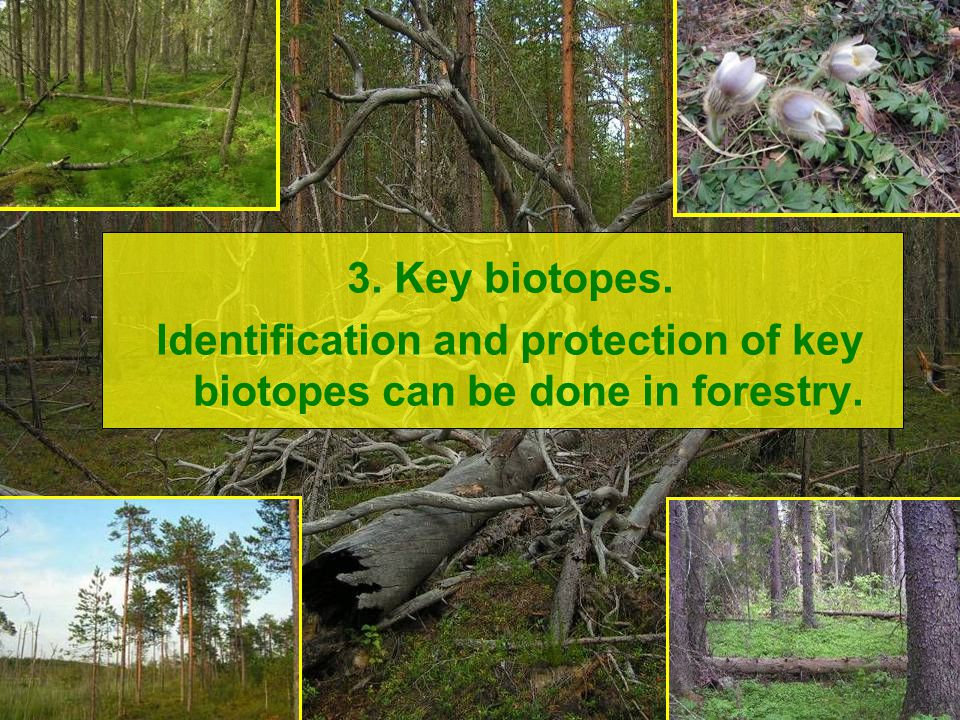 3. Key biotopes. Identification and protection of key biotopes can be done in forestry.