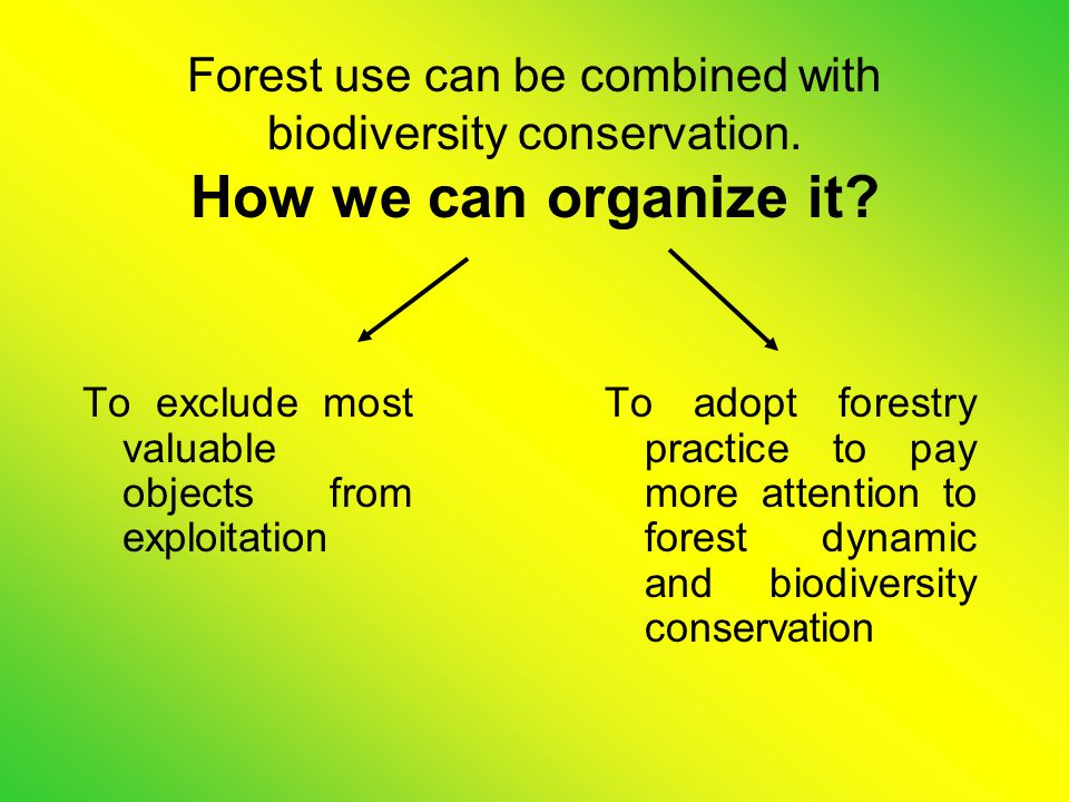 Science investigations which deal with protection biodiversity in forestry