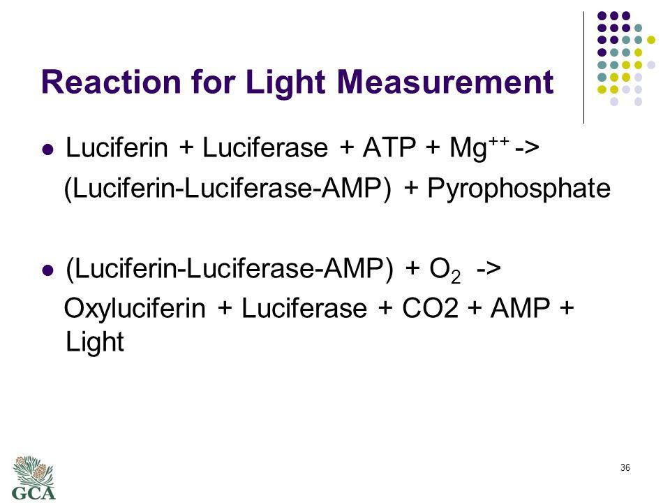 Reaction for Light Measurement Luciferin + Luciferase + ATP + Mg ++ -> (Luciferin-Luciferase-AMP) + Pyrophosphate (Luciferin-Luciferase-AMP) + O 2 -> Oxyluciferin + Luciferase + CO2 + AMP + Light 36