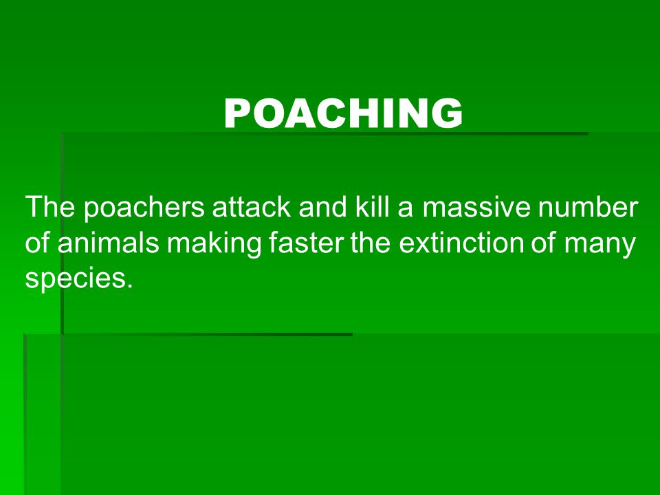 POACHING The poachers attack and kill a massive number of animals making faster the extinction of many species.