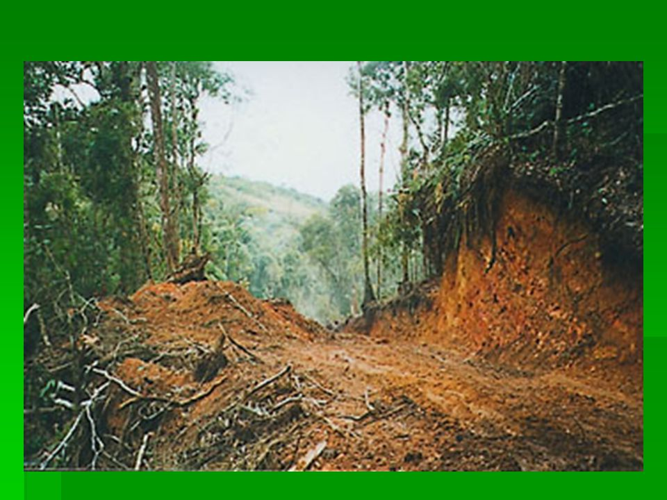  Habitat destruction is the process in which natural spaces are destroyed by human acts or natural disasters.
