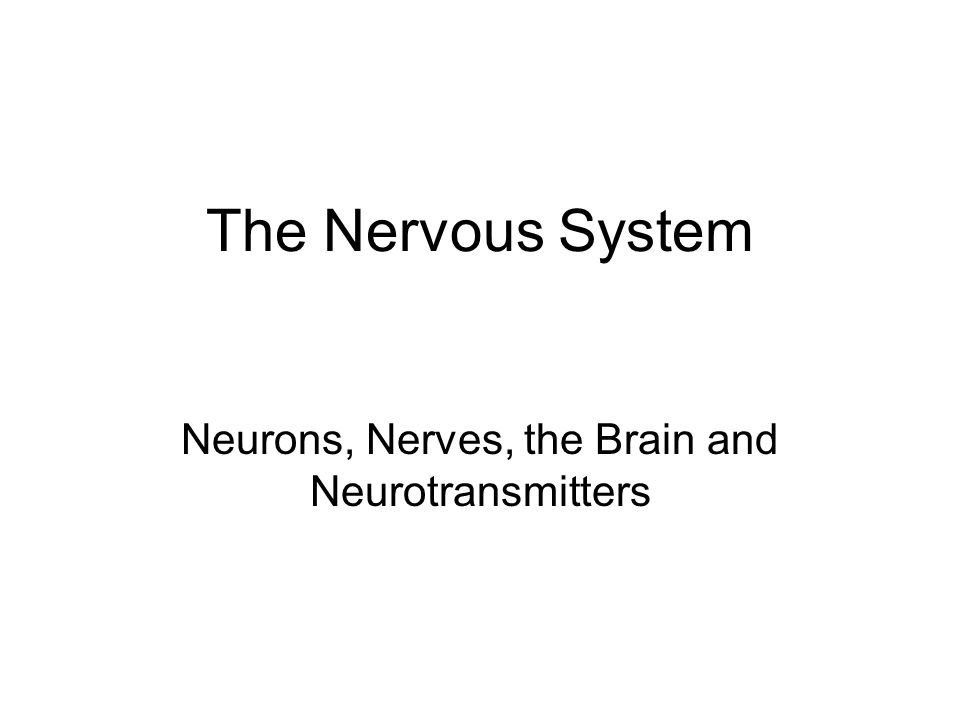The Nervous System Neurons, Nerves, the Brain and Neurotransmitters