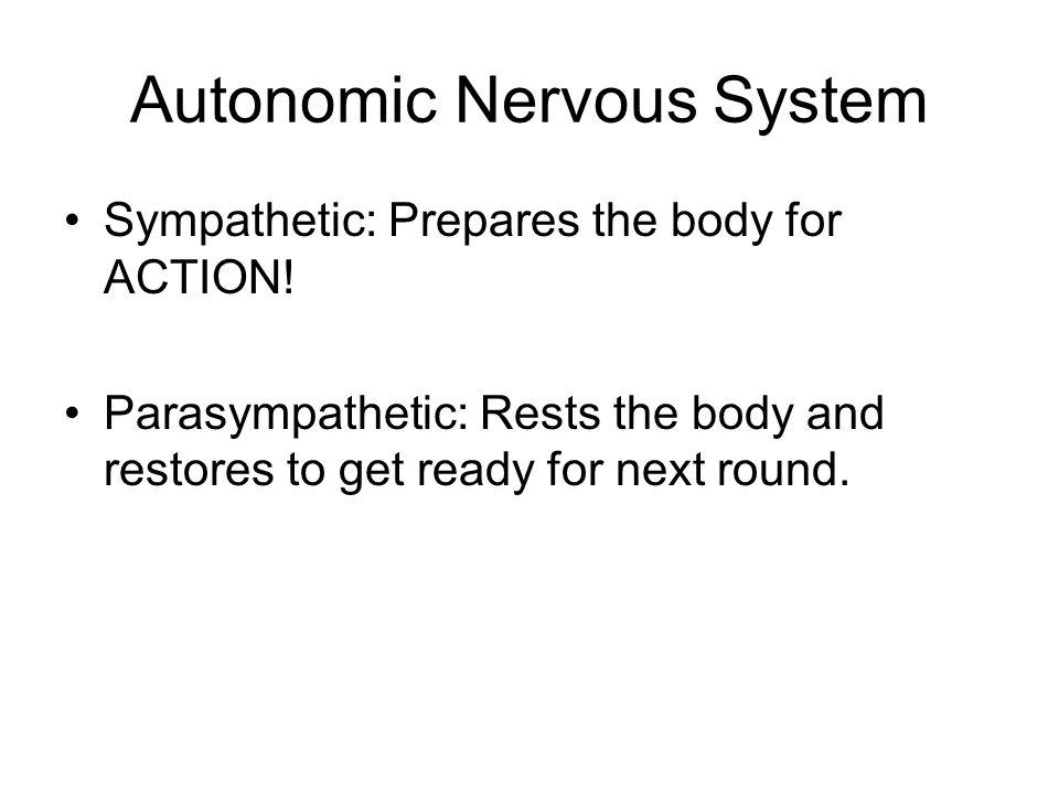 Autonomic Nervous System Sympathetic: Prepares the body for ACTION.