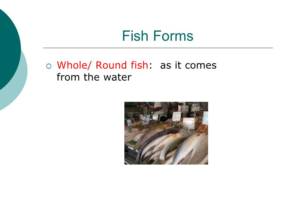 Fish Forms  Whole/ Round fish: as it comes from the water