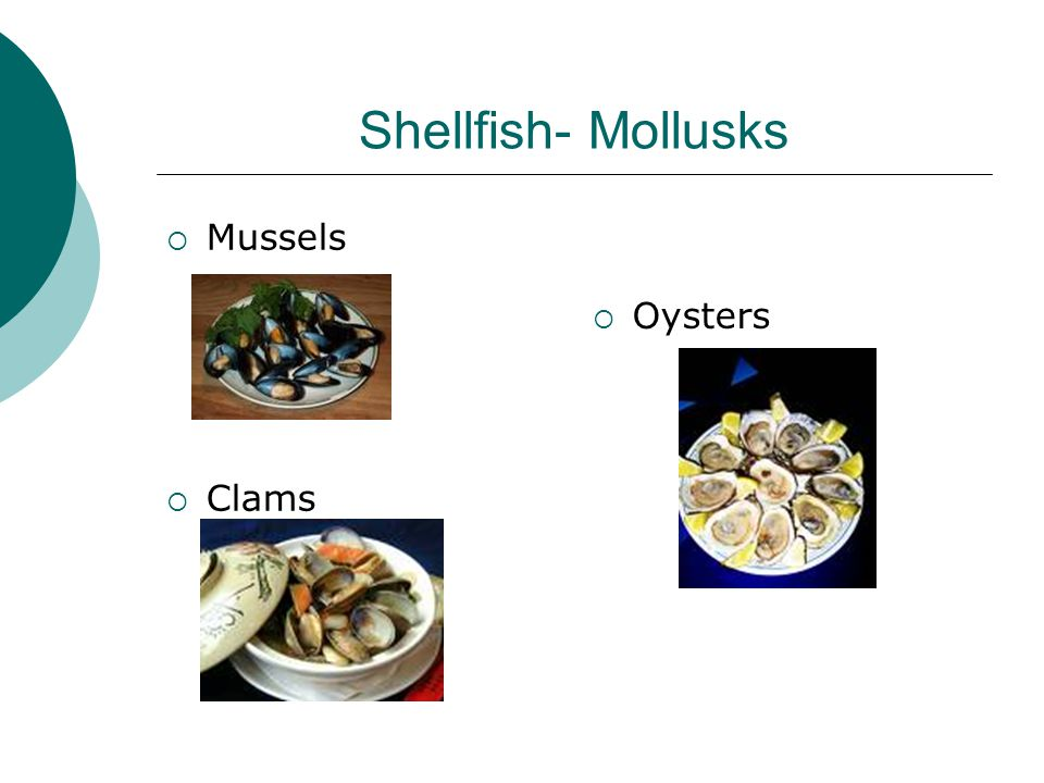 Shellfish- Mollusks  Mussels  Clams  Oysters