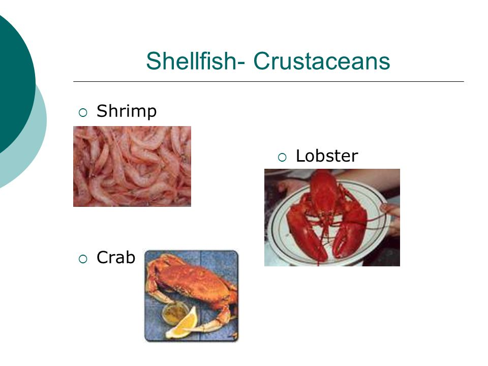 Shellfish- Crustaceans  Shrimp  Crab  Lobster