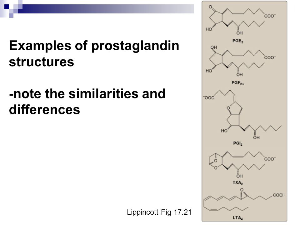 Examples of prostaglandin structures -note the similarities and differences Lippincott Fig 17.21