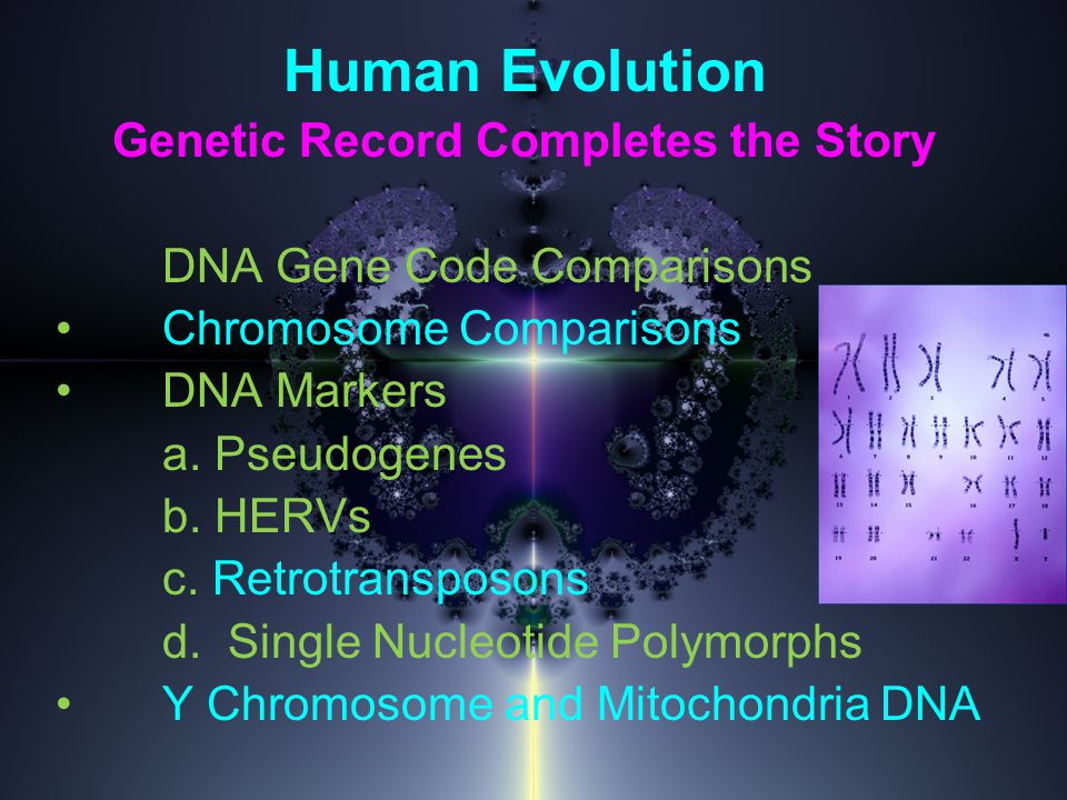 Human Evolution Genetic Record Completes the Story DNA Gene Code Comparisons Chromosome Comparisons DNA Markers a.