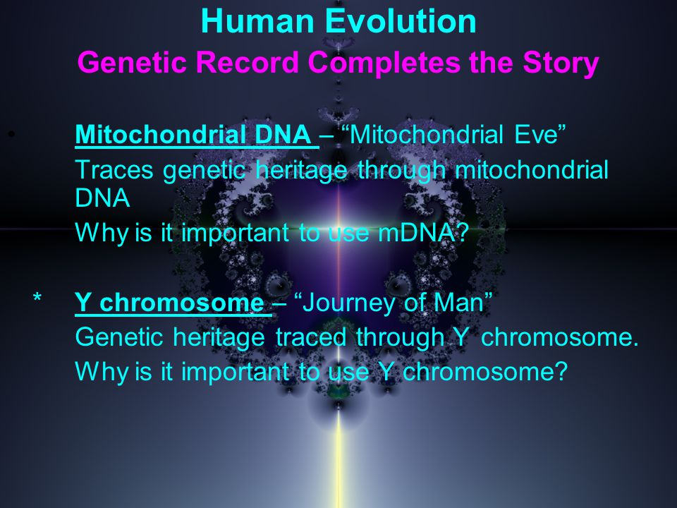 Human Evolution Genetic Record Completes the Story Mitochondrial DNA – Mitochondrial Eve Traces genetic heritage through mitochondrial DNA Why is it important to use mDNA.