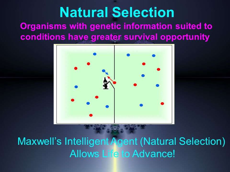 Natural Selection Organisms with genetic information suited to conditions have greater survival opportunity Maxwell's Intelligent Agent (Natural Selection) Allows Life to Advance!