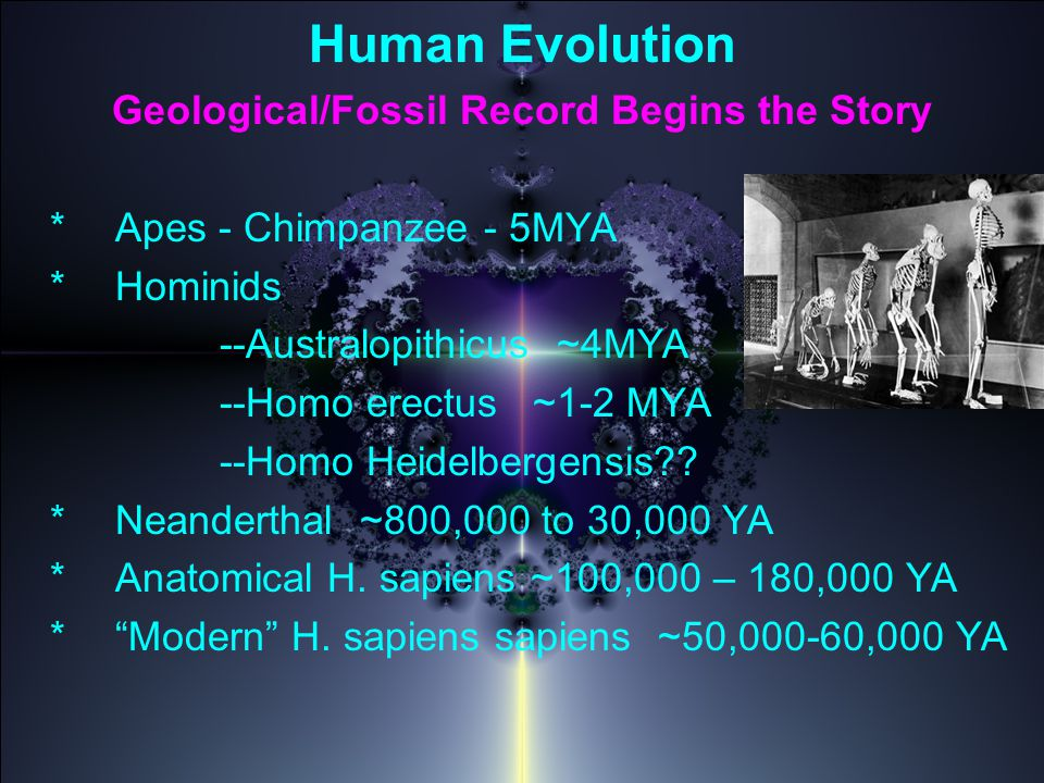 Human Evolution Geological/Fossil Record Begins the Story *Apes - Chimpanzee - 5MYA *Hominids --Australopithicus ~4MYA --Homo erectus ~1-2 MYA --Homo