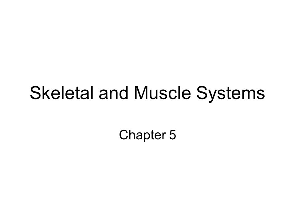 Skeletal and Muscle Systems Chapter 5